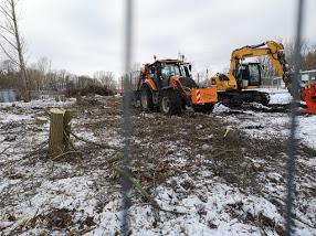 Petition gegen weitere ungenehmigte Abholzungen
